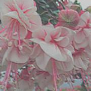 Painted Pink Fushia Art Print