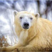 Painted Polar Bear  Art Print