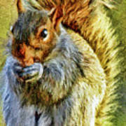 Painted Squirrel  Art Print