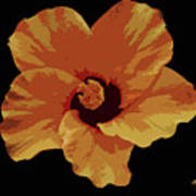 Painter Hibiscus Art Print