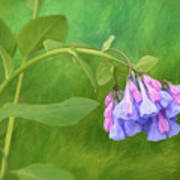 Painterly Virginia Bluebells Art Print