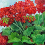 Painting Of Red Geraniums Art Print
