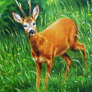painting of young deer in wild landscape with high grass. Eye contact. Art Print