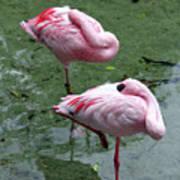 Pair In Pink Art Print