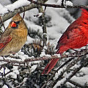 Pair Of Cardinals In Winter Art Print