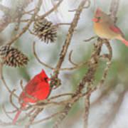 Pair Of Cardinals Art Print