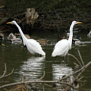 Pair Of Egrets Print by George Randy Bass