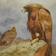 Pair Of Golden Eagles By Thorburn Art Print