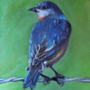 Pajarito Azul De Espaldas Art Print