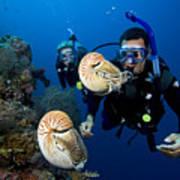 Palau Underwater Art Print