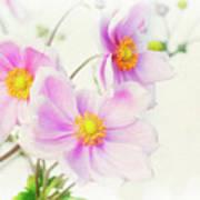 Pale Pink Anemone Art Print