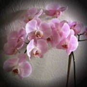 Pale Pink Orchids B W And Pink Art Print
