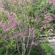 Pale Pink Spring Art Print