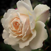 Pale Yellow Rose After The Rain - Glow Art Print