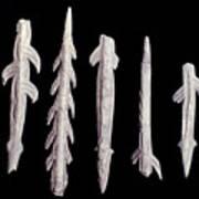 Paleolithic Harpoons Art Print