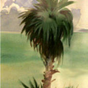 Palm At Horseshoe Cove Art Print
