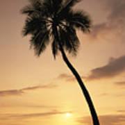 Palm At Sunset Art Print