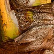 Palm Bark Art Print