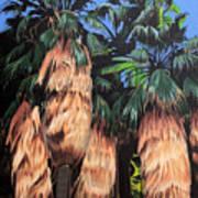 Palm Canyon Entrance Art Print