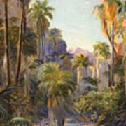 Palm Canyon Art Print