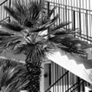 Palm Chevron Palm Springs Art Print