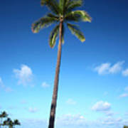Palm Day Art Print