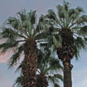Palm Desert Palms  Art Print
