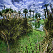 Palm Desert Sky Art Print