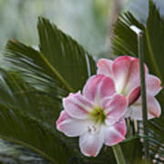 Palm Flower Art Print