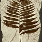 Palm Fossil Sandstone  Art Print