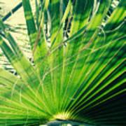 Palm House Branch Art Print