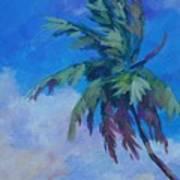 Palm In Evening Light Art Print