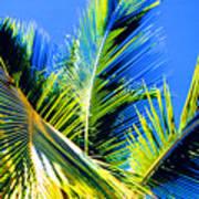 Palm Leaves Against The Sky 3 Ae  Art Print