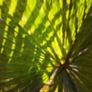 Palm Leaves And Morning Light Art Print