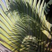 Palm On Palm Art Print