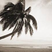Palm Over Beach Art Print