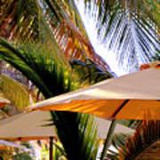 Palm Serenity Art Print