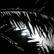 Palm Silhouettes Kaanapali Art Print