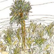 Palm Tree 1 Art Print