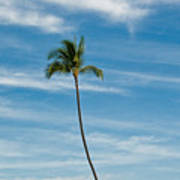 Palm Tree And Clouds Art Print