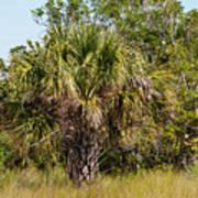 Palm Tree In Golden Grass Art Print