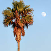 Palm Tree In Huntington Beach Art Print