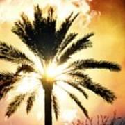 Palm Tree In The Sun #2 Art Print