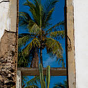 Palm Tree In The Window Art Print