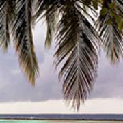Palm Tree Leaves At The Beach Art Print
