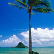 Palm Tree On The Beach Kaneohe Bay Oahu Hawaii Art Print