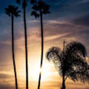 Palm Tree Sunset Silhouette Art Print