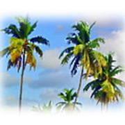 Palm Trees - 5 Art Print