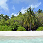 Palm Trees And Exotic Vegetation On The Beach Of An Island In Maldives Art Print