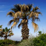 Palm Trees Growing Along The Beach Art Print